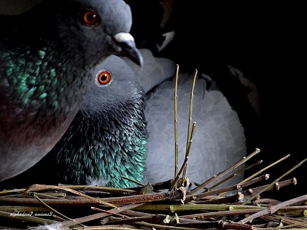 A Closeup of the love birds..