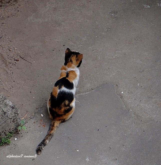 Ah!! The return of the cat :)