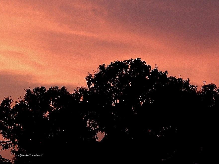 The dawn sky