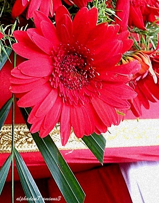 The Flower..