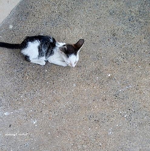 A kitten here :)))