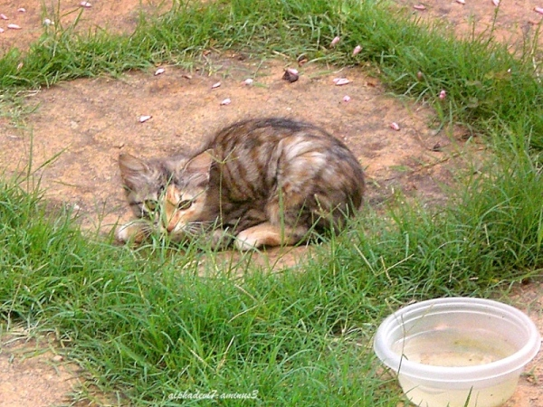 Kittens  &  Cats  1
