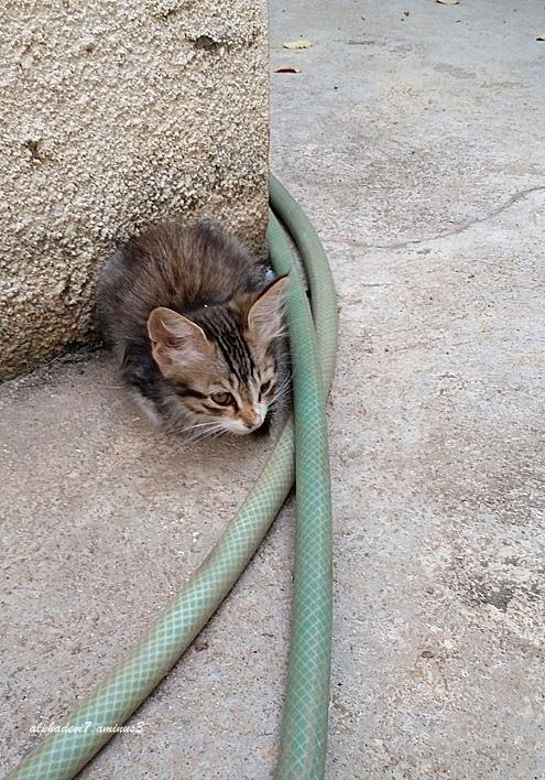 Cats  &  Kittens  2