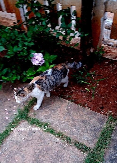 Cats  &  Kittens   8