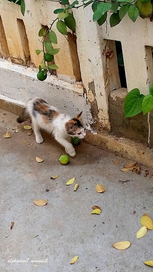 Cays  &  Kittens   9