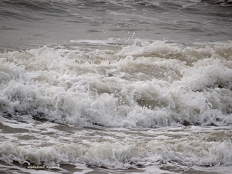 The Waves...