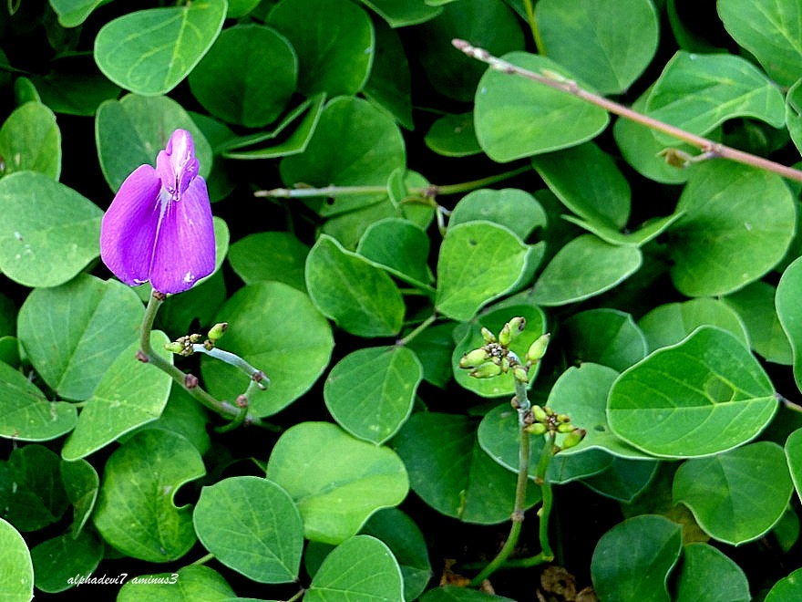 The violet flowers
