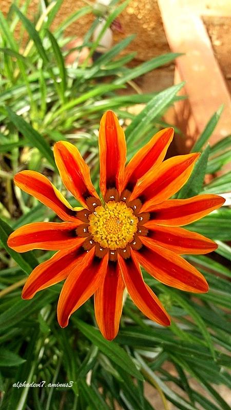 The full flower