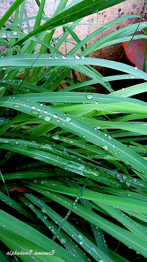 Rain  Drops ...2