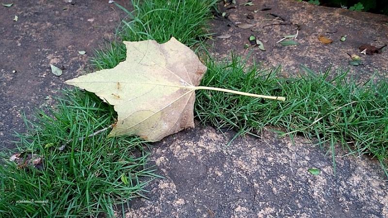 The Fallen Leaf :)