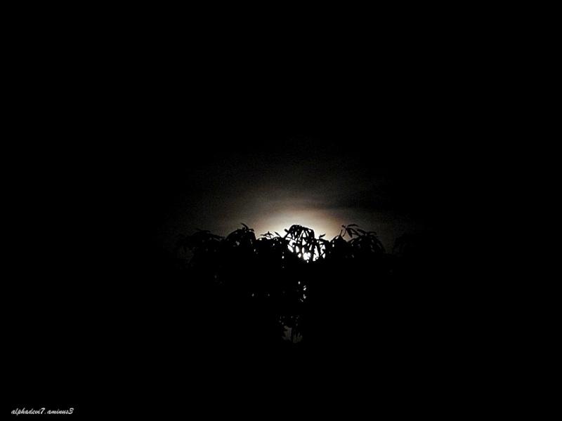 The Moon rising   1