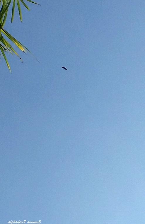 The soaring eagle ...