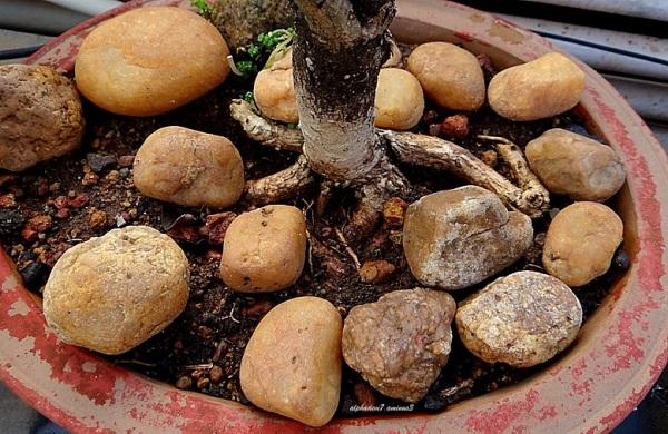Pebbles in a Pot
