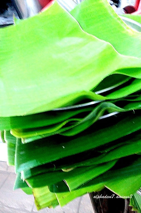 The banana leaves