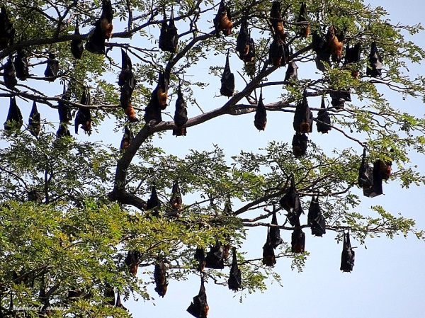 The Bat tree :)))   1