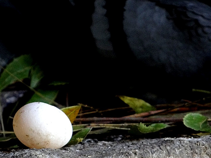The lonely egg :))))