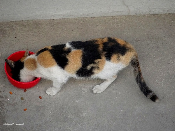 Aw!! The Calico  breakfast