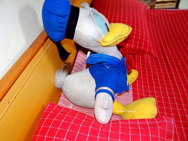 The Duck Again !!
