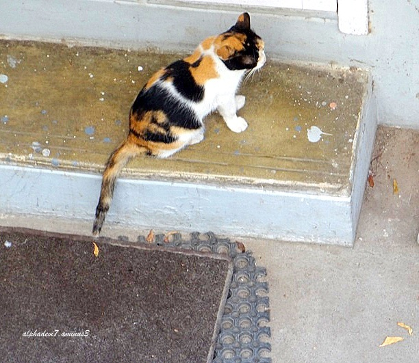 The Return of the calico cat....