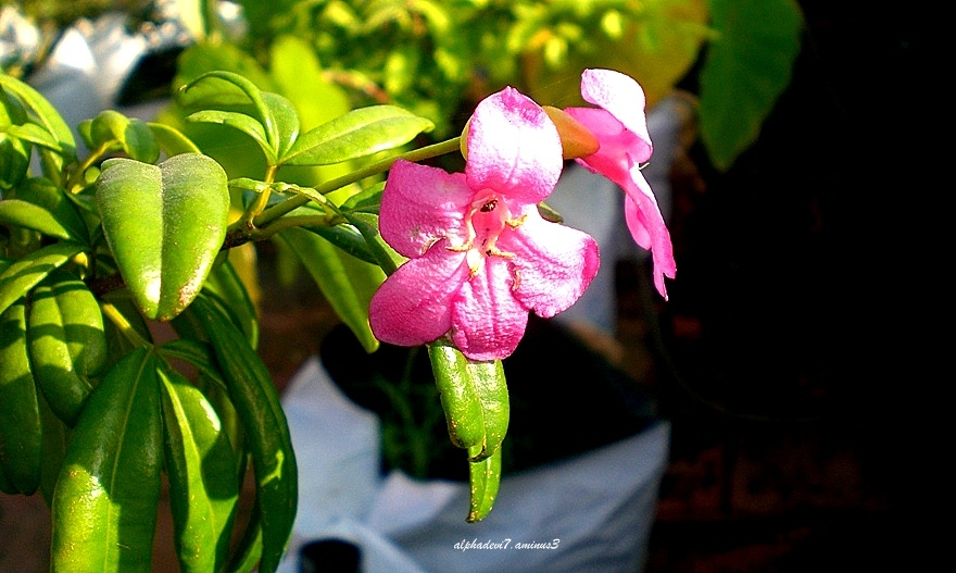 Plant & Flowers  2