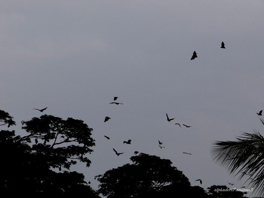 Tha Disturbed Bats   1