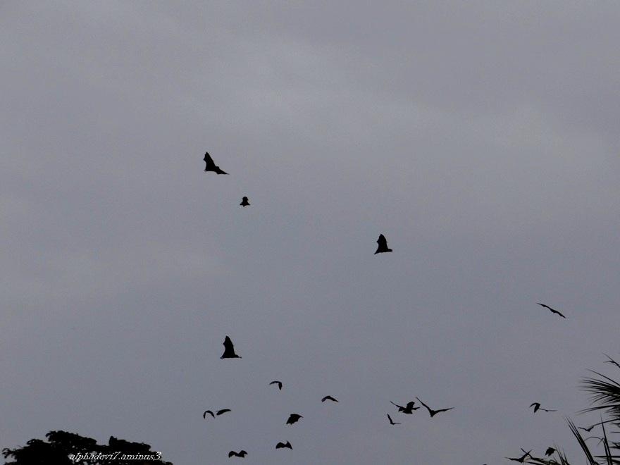 The Disturbed Bats  2