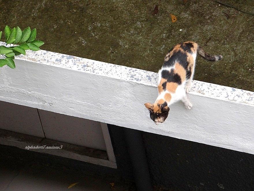 It is raining cats again :)