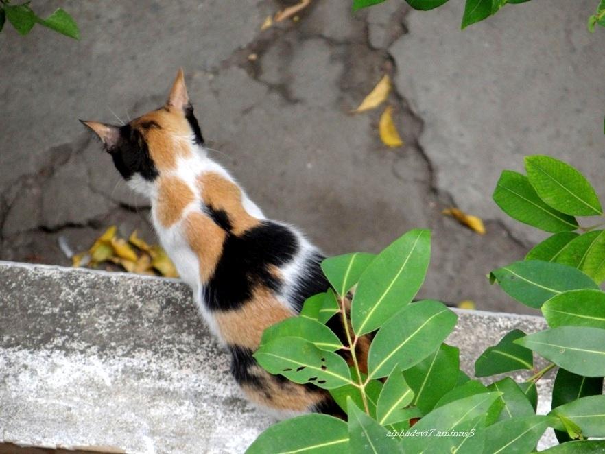 It is raining cats again  5