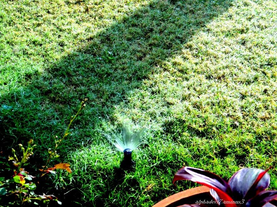 The  sprinkler...