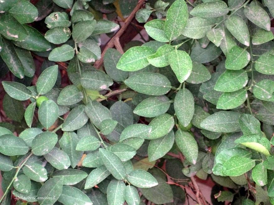 Leaves..