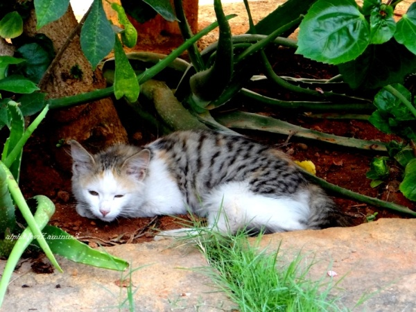 The Cat under a plant