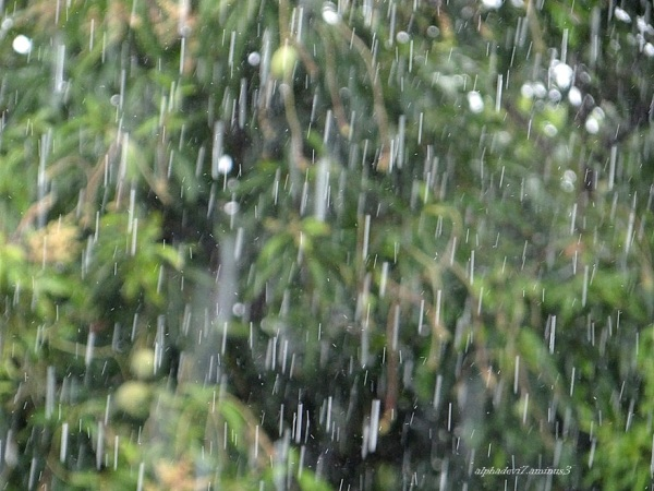 The Zoom...rain