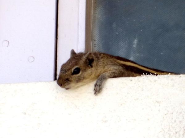 Squirrel's Adventure  5
