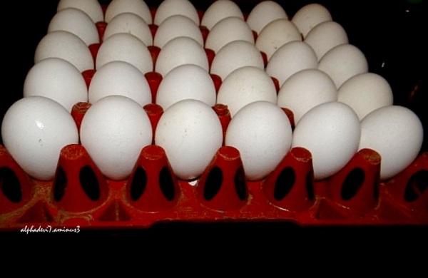 Eggs Anyone ?