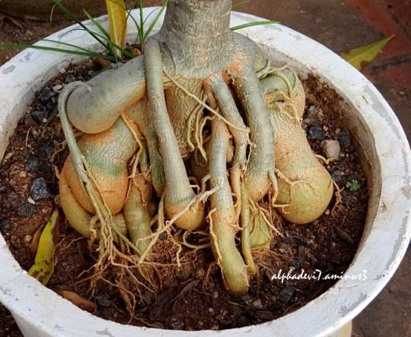 Funny  Bizarre  Roots   1