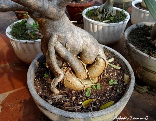 Funny  Bizarre  Roots  2