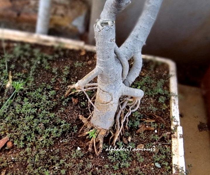 Funny  Bizarre  Roots...5