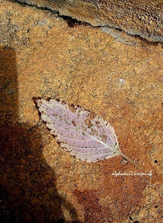The lone dry leaf...