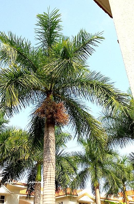 The Palm Tree :))))