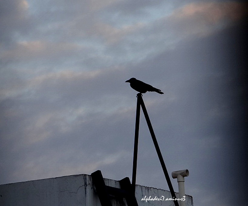 The Cloudy sky and the crow.