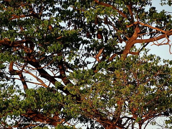 Closeup of the tree :)))