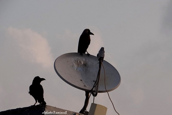 Winged Signals