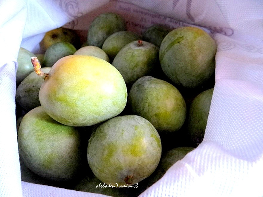 The Mangoes in a bag   1