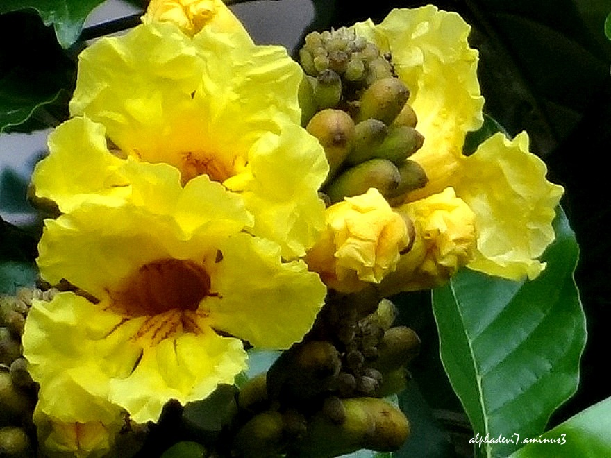The Yellow Flowers:)))