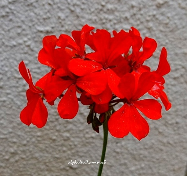 Red Flo9wers :)))