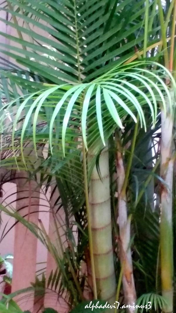 Tha Palms   2