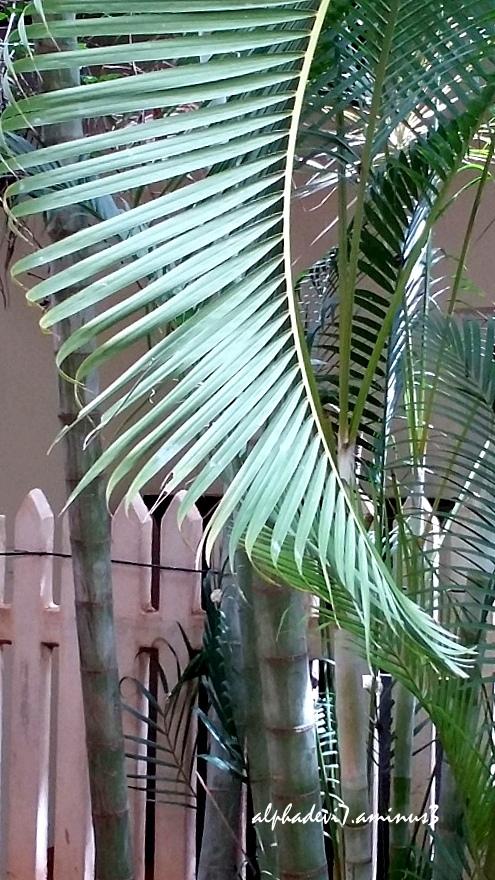 The Palms ...3