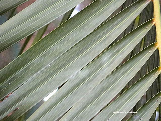 Thae Palms   4