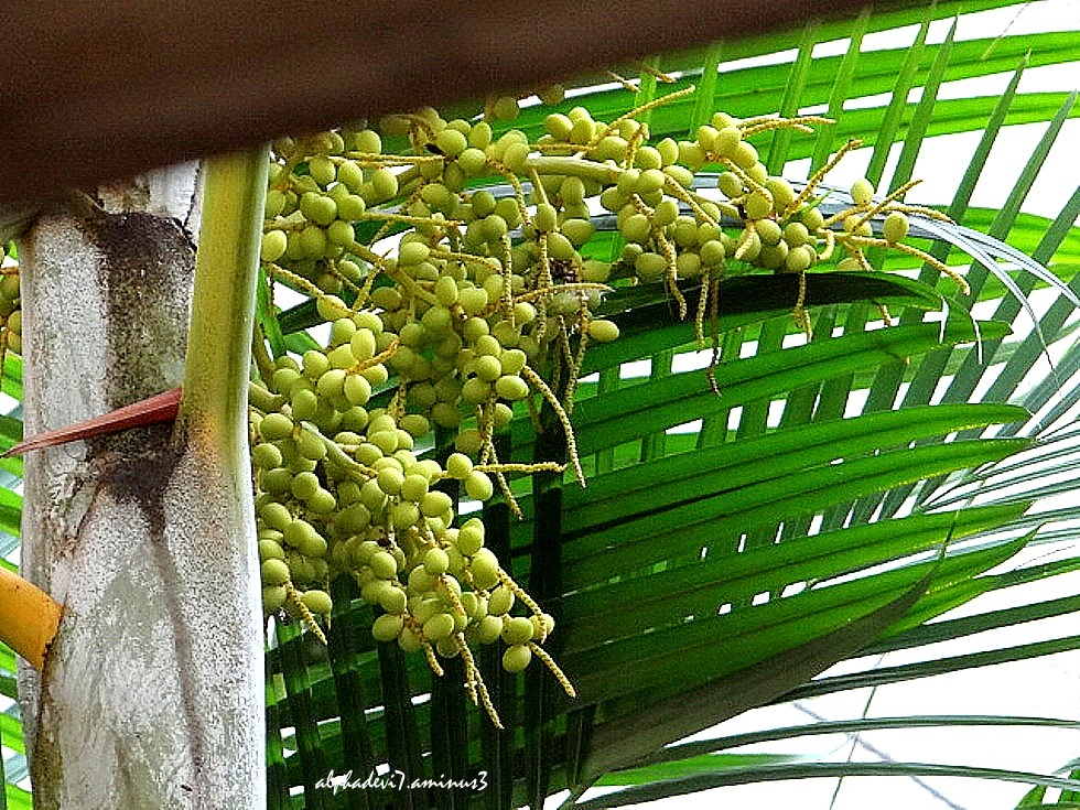The Palms   6
