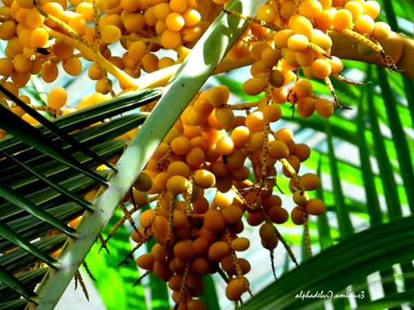 The Palms    7
